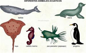Animales acuaticos (Diccionario visual)