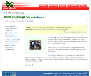 Chinche cavadora negra (Cydnus aterrimus)