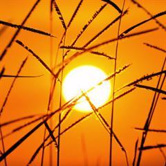 La energía del Sol