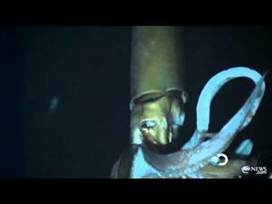 Las primeras imágenes en vídeo del calamar gigante