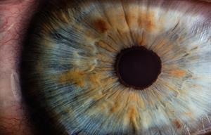 El sentido de la vista. Experimento para niños de 8 a 12 años. (Instrucciones para el profesorado)