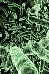 What Music Does Bacteria Enjoy the Most?