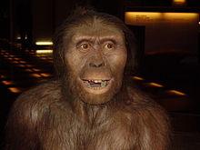 Proceso de hominización y cultura material (Heródoto)