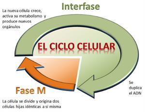 La célula, unidad de vida