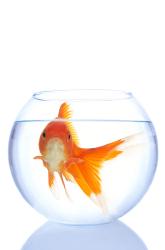 A Fishy Memory