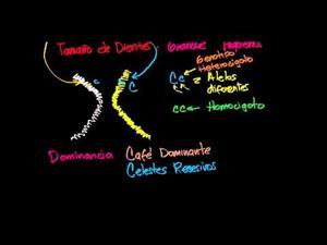 Introducción a la herencia (Khan Academy Español)