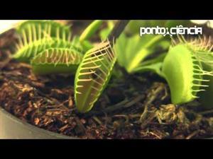 Plantas carnívoras, vegetales nada vegetarianos (Pontociência)
