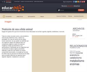 Nutrición de una célula animal (Educarchile)