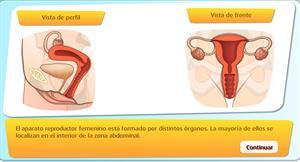 Juego interactivo: órganos del aparato reproductor femenino