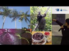 Unidades de conservação de uso sustentável no Brasil