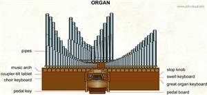 Organ  (Visual Dictionary)