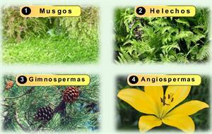 Reproducción sexual de la plantas: Musgos, helechos, gimnospermas y angiospermas