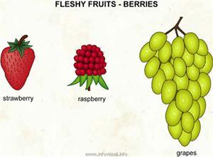 Berries  (Visual Dictionary)