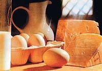 Principios alimenticios. El sistema digestivo (Icarito.cl)