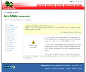 Gacela de Waller (Litocranius walleri)