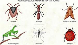 Insectos (Diccionario visual)