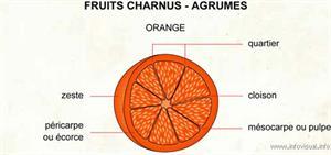 Agrumes (Dictionnaire Visuel)