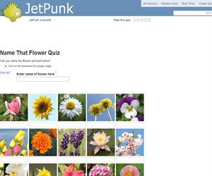 Name That Flower Quiz
