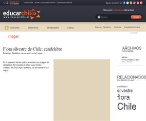 Flora silvestre de Chile: candelabro (Educarchile)