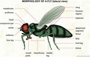 Fly  (Visual Dictionary)