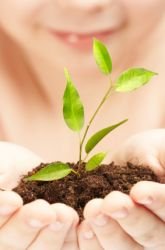Plant Neighbors: Friends or Foes?