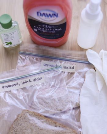 Do Hand Soaps and Sanitizers Prevent the Growth of Bread Mold?