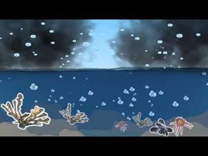 El proceso de acidificación del mar. Vida marina y sostenibilidad