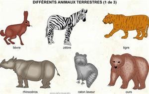 Différents animaux terrestres (1 de 3) (Dictionnaire Visuel)