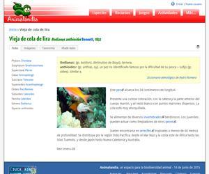 Vieja de cola de lira (Bodianus anthioides)