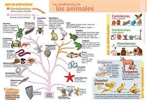 La clasificación de los animales (Infografía y hoja de examen 6º Primaria)