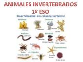 Animales invertebrados 1º eso (Óscar Malo)