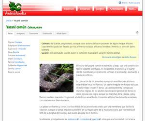 Yacaré común (Caiman yacare)