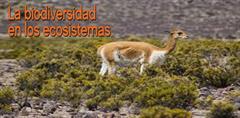 Ecosistema Terrestre (PerúEduca)