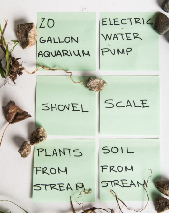 Flow Rate and Plant Growth