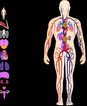 El cuerpo humano en flash