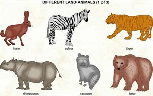 Different land animals 1  (Visual Dictionary)