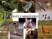Aves y mamíferos: clasificación y características