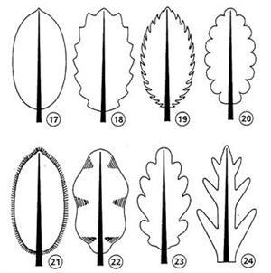 Observación y clasificación de hojas (mclibre.org)