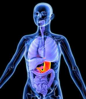 Anatomía humana: Funciones de la nutrición (natureduca.com)