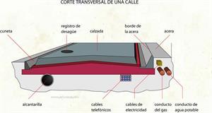 Corte transversal de una calle (Diccionario visual)