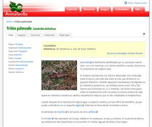 Tritón palmeado (Lissotriton helveticus)