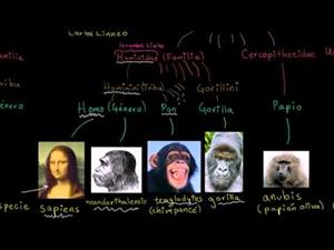 Taxonomía y el árbol de la vida (Khan Academy Español)