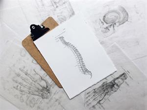 El sistema óseo. Práctica para niños de 4 a 7 años