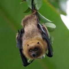 """Un animal muy necesario: """"los murciélagos"""""""