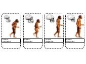 """Foldable"" (recortable) de la evolución humana"