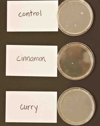 Ability of Curry and Cinnamon to Inhibit Bacterial Growth