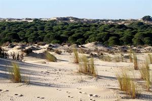 WebQuest: Interpretación y conservación del medioambiente