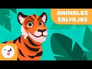Los animales salvajes para niños - Vocabulario