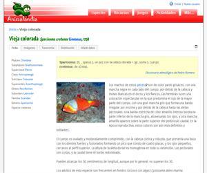 Vieja colorada (Sparisoma cretense )