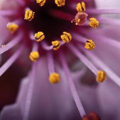 Reproducción de plantas con flores
